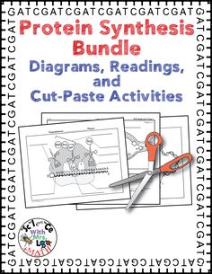 Protein Synthesis Bundle of Diagrams, Readings, and Cut-and-Paste Activities, all about DNA Replication, Transcription, and Translation!