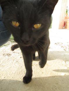 #lovemycat #mili #blackcat