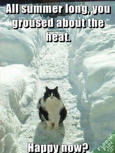 cat-hates-winter.jpg