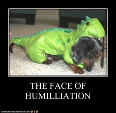 Funny Dachshund Pictures with Captions | ... dachshund - Page 35 - Loldogs n Cute Puppies - funny dog pictures