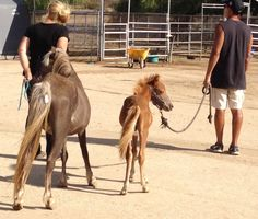 Cheyenne and Chance from behind. So very, very skinny!