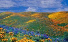 Vallée d'Antelope - Californie - Mark Twain :  Le pardon est le parfum que la violette répand sur le talon qui l'a écrasée. Il perdono è la fragranza che la viola lascia sul tacco che l'ha calpestata.