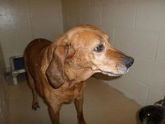 "THE DAVINCI FOUNDATION FOR ANIMALS RESCUE ACROSS THE NATION Rescue Info: Please help this wonderful sweet senior ""KYLIE"" (sweetheart) found in Beaver County, Brighton Twp, Pa in August......Now needs a warm loving home for the holidays!"