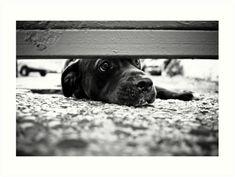Black and White Street Photography Art Print for Sale  | #dogonstreet #streetphotography #streetdog #bwstreet #bwstreetphoto #streetphoto #leica #leicaphoto #luciaeggenhoffer