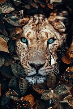 Wallpaper of a lioness in the jungle, surrounded by leaves and insects - photo . - Wallpaper of a lioness in the jungle, surrounded by leaves and insects – photography – - Tier Wallpaper, Iphone Background Wallpaper, Animal Wallpaper, Iphone Wallpaper Jungle, Photo Wallpaper, Insect Photography, Animal Photography, Iphone Photography, Wildlife Photography