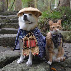Samurai Dog And Traveler Cat