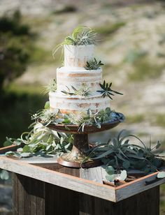 airplant naked cake