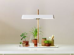 a green light for growing herbs and such in low light spaces