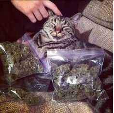 """""""Smoke weed every day!"""" 