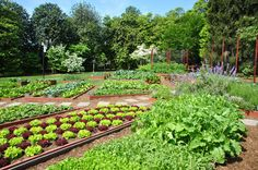 The largest vegetable garden in White House history is a green & beautiful model for sustainable, healthy living. Take a peek at all the history among its produce. White House Garden, Home And Garden, Farm Gardens, Outdoor Gardens, Garden Farm, House Gardens, Outdoor Patios, Victory Garden, Market Garden