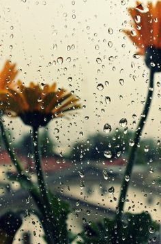 Daisies in the rain......