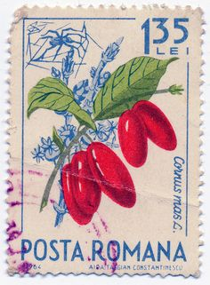 1964 Romanian Stamp - Cornus mas by alexjacque, via Flickr