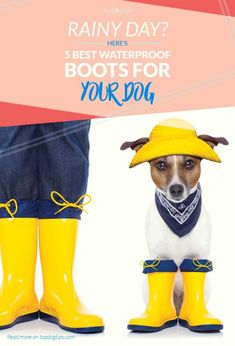 The best waterproof boots for dogs are the perfect protection for dogs walking through rain, snow or other elements. They're also great on rough terrain. Dog Rain Boots, Rubber Rain Boots, Best Waterproof Boots, Rain Gear, Snow Dogs, Dog Walking, Hunter Boots, Best Dogs, Fur Babies