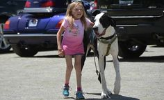 Service Dog Gave A Little Girl Independence, So We Gave Him His Best Day Ever