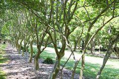I uploaded new artwork to fineartamerica.com! - 'Norfolk Botanical Garden 7' - http://fineartamerica.com/featured/norfolk-botanical-garden-7-lanjee-chee.html