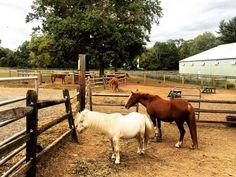 Ponies. Lord Stirling Stables #WorldSmileDay #ponies #horses #horsesofinstagram #LordStirlingStables