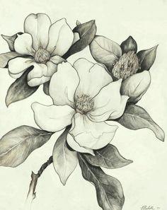 """{""""i"""":""""imgs\/52e21f53dba3c6145443047e04aad4dc.jpg"""",""""w"""":""""480″,""""h"""":""""605″,""""l"""":""""http:\/\/www.artworkbymichelle.com\/img\/lg\/02_florals\/magnolia-lg.gif""""}"""