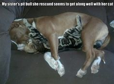 The infinite love and fight between dogs and cats.--8 Pics