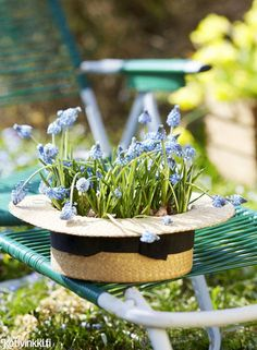 Kauneimmat pääsiäiskukat – 11 ideaa asetelmiin   Kotivinkki Planting Flowers, Anna, Plants, Plant, Planets