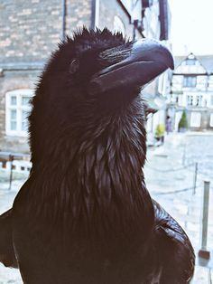 "Ravenmaster on Twitter: ""https://t.co/Y4HDZXMH0R"""