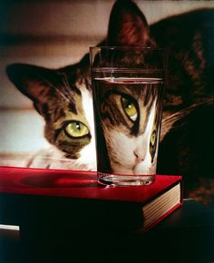 "life: ""It's National Cat Day! In celebration, a classic LIFE photo by Nina Leen with a cat peering into glass, which reflects its image in reverse, creating perfect example of light refraction, 1963. (Nina Leen—The LIFE Picture Collection/Getty..."