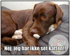 These funny dogs and cats are on a undertaking to make you smile.See more ideas about Funny animals, Dog cat and Cute animals.Read This Top 24 Funny Cats and Dogs Funny Animal Memes, Funny Animal Pictures, Funny Dogs, Funny Memes, Animal Humor, Funny Photos, Adorable Pictures, Amazing Pictures, Funny Videos
