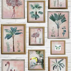 Graham & Brown Wallpaper   Tropical Frames Multi   106946 – WonderWall by Nobletts