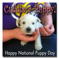 Happy National #Puppy Day by mkclinton.com #Westies