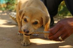 Chewing sticks come into my hobbies!