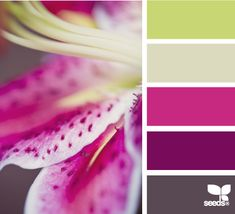 Potential colour palette. Would be lovely to bring in accents of the slate grey, plum and green.