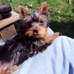 Puppy Tessa