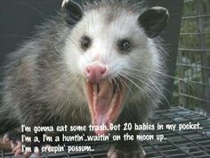 Thrift shop possum..lol