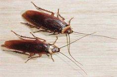 Κοινοποιήστε στο Facebook Το γνωρίζετε πως οι περισσότεροι έχετε ήδη στο σπίτι σας τα συστατικά που κάνουν τις κατσαρίδες να απομακρύνονται και να… εξουδετερώνονται μακριά απ' το δικό σας χώρο; Το κυνήγι της κατσαρίδας κάθε καλοκαίρι αναδεικνύεται σε μέγιστο πονοκέφαλο...