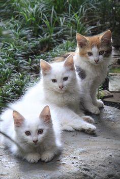 Three little kittens. Kittens And Puppies, Cute Cats And Kittens, I Love Cats, Crazy Cats, Cool Cats, Kittens Cutest, Pretty Cats, Beautiful Cats, Animals Beautiful