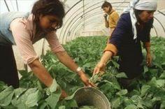 El Magrama concede ayudas para la promoción de las mujeres del medio rural por valor de 457.000 euros | Marjales y Celemines