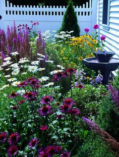 Plant coneflower daisies and black-eyed Susans for fall cottage-style color >>