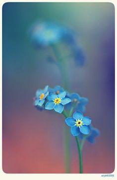 Мать Природа, Посадка Цветов, Красивые Цветы, Цветочные Композиции, Растения, Красочные Цветы, Акварельные Картины, Садоводство, Сады