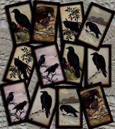 Ravens! This is pretty.