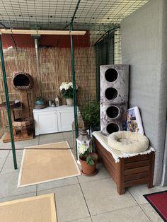 Outdoor Cats, Outdoor Decor, Outdoor Cat Enclosure, Patio, Home Decor, Decoration Home, Room Decor, Home Interior Design, Home Decoration