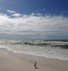 176 best destin florida beach photos images destin florida rh pinterest com