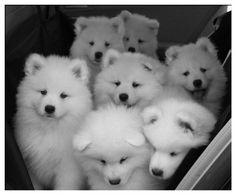 puppies |vie We<3.it