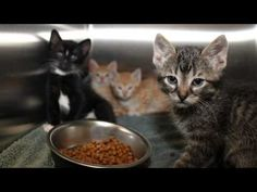 Abandoned On The Tracks - How Wayside Waifs helps animals in need.