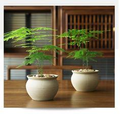 Small Bamboo Plants, Outdoor Plants, Green Plants, Potted Plants, Indoor Outdoor, Garden Terrarium, Bonsai Garden, Planting Seeds, Planting Flowers