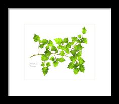 Hawthorn Pressed Leaf Art Framed Print by Christina Rollo.  All framed prints are professionally printed, framed, assembled, and shipped…