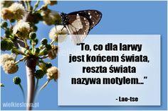 To, co dla larwy jest końcem świata... #LaoTse, #Koniec-świata…