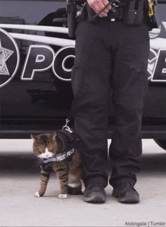 This is why cats are not police