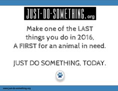 #NewYearsEve - make it matter for an animal in need. #ROC