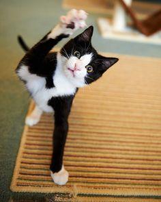 Kitty with attitude...
