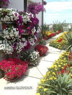 v38 Window Boxes, Plants, Garden, Outdoor, Petunias, Container Gardening, Nature, Sidewalk