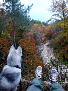 Examining the path Husky Mix, Samoyed, Perfect World, Cute Animal Pictures, Akita, Cute Animals, Siberian Huskies, Wolves, Fur Babies
